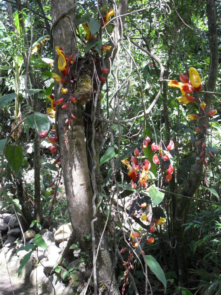 Orchideen in Santa Elena/ Monteverde in Costa Rica