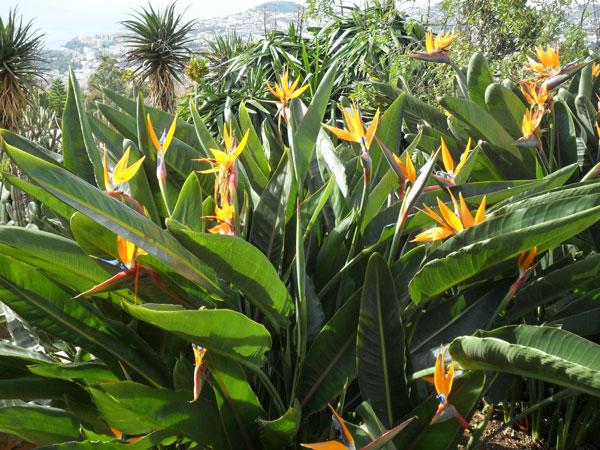 Jardim Botânico Funchal Madeira