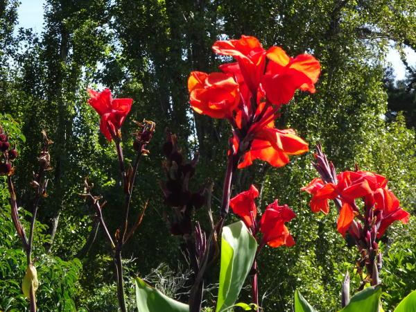Blumen auf Waiheke Island