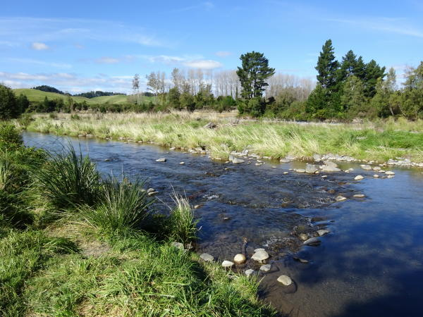 Tongariro River Trail – Wandern in Turangi