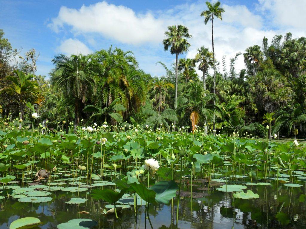Botanischer Garten in Pamplemousses auf Mauritius