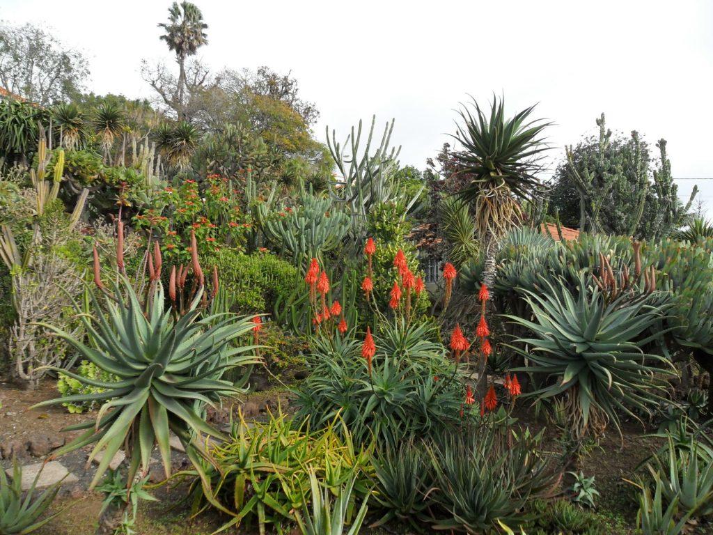 Jardim Botânico Funchal auf der Insel Madeira