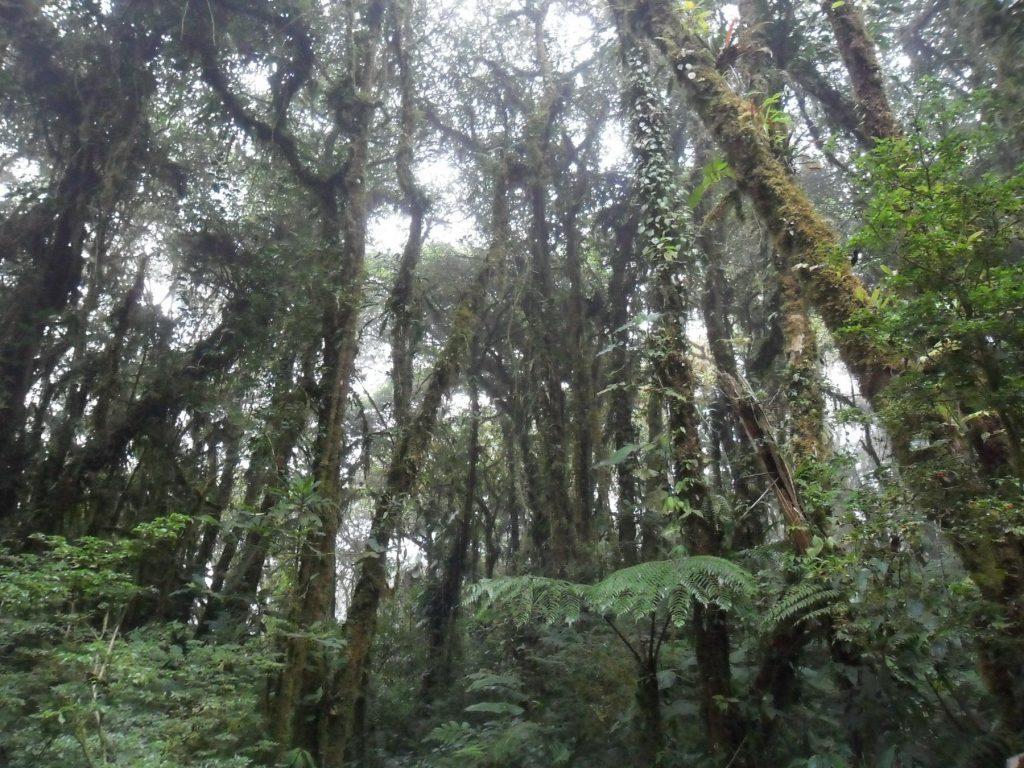 Nebelwald Santa Elena (Monteverde) in Costa Rica