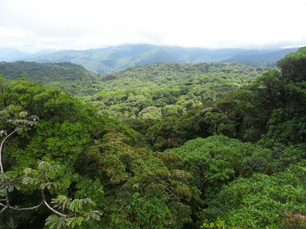Nebelwald von oben (Santa Elena/ Monteverde) in Costa Rica