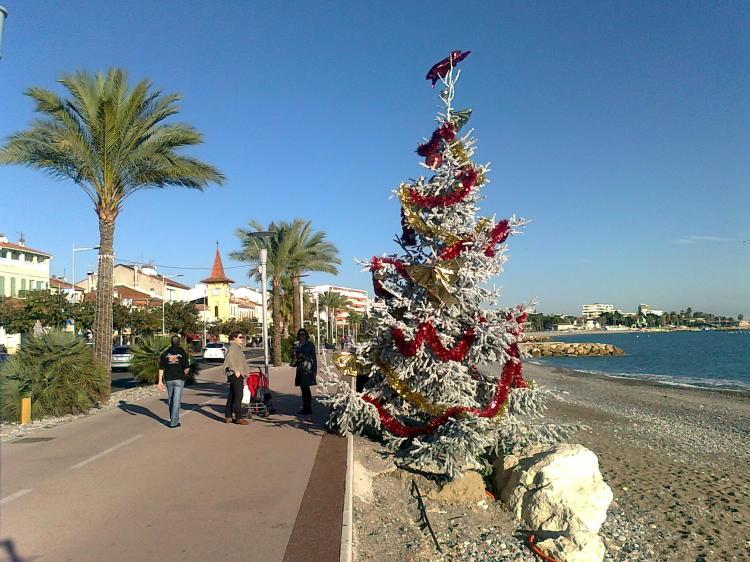 Weihnachtsbäume in der Nähe von Nizza