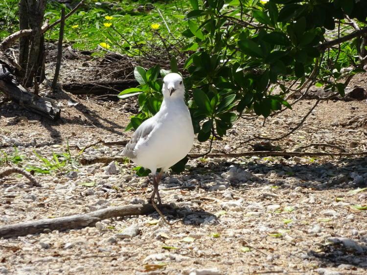Île aux Canards - Duck Island
