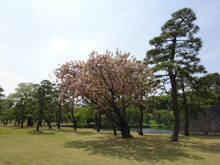 Park Tokio