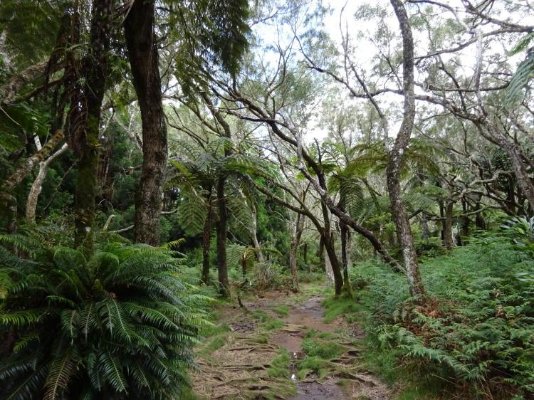 Wandern im Forêt de Bélouve