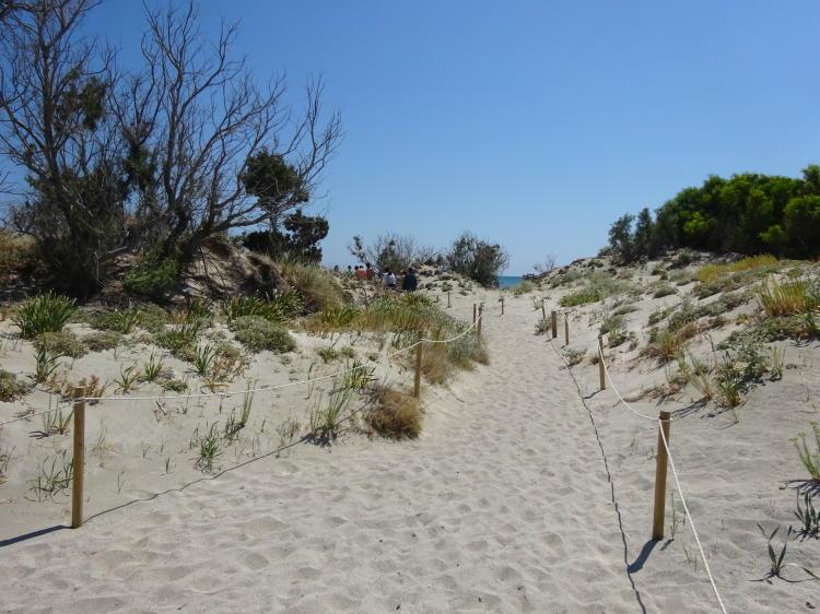 Fußweg durch die Dünen