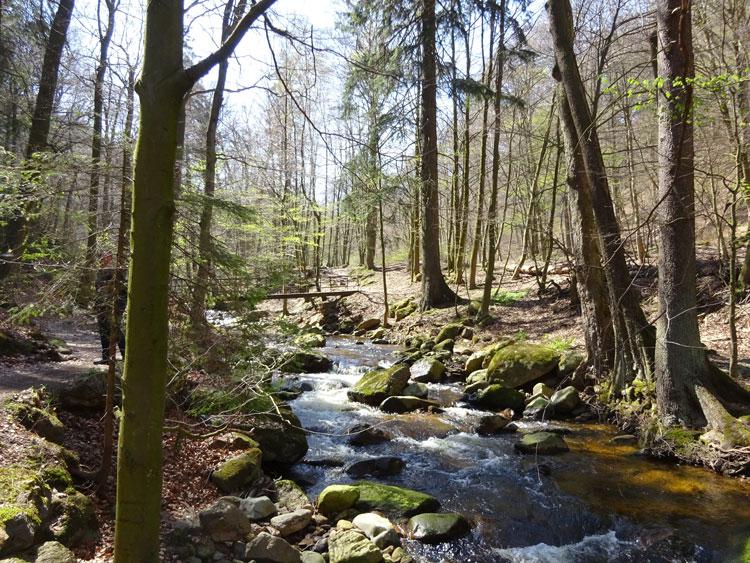 Fluss Ilse im Harz