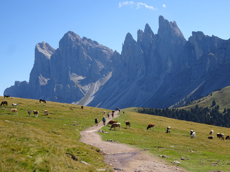 Panoramaweg-zur-Brogleshütte